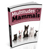 Thumbnail Multitudes Of Mammals - Choose a Small Mammal as Pet.